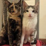 Meet Myles & Penny! (Homed)