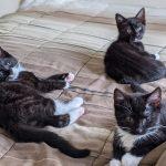 Meet The K-Kittens - Kevin, Kyle & Kylie!