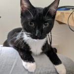 Meet Kylie! (Booked)