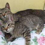 Meet Katrina & Little Kitt! (Booked)