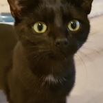 Meet Grace!